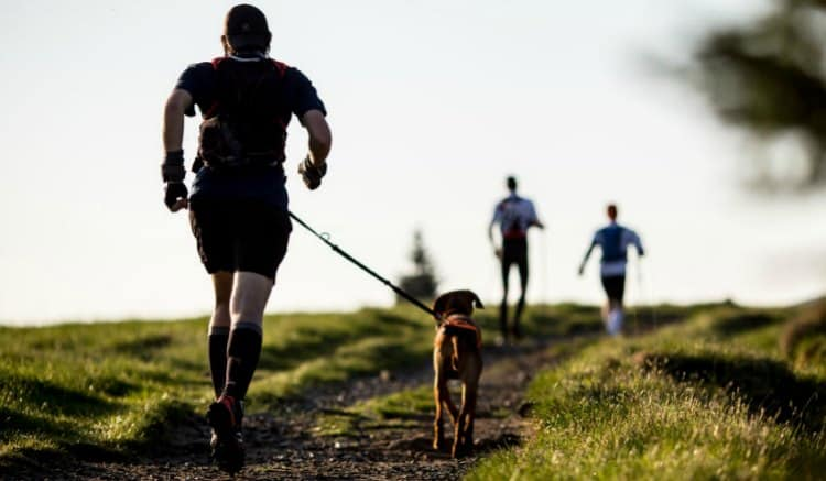 what breed of dog is best for running