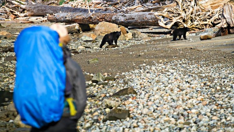 are there grizzly bears on the pacific crest trail